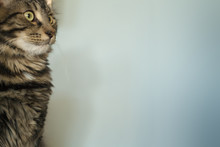 Arrogant Cat