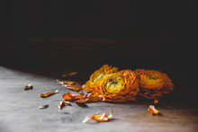 Dropped Flowers On Floor