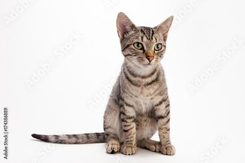 Foto op Aluminium Kat 猫の素材