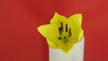 Time-lapse Of Yellow Lily Open...