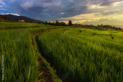 Poster Rijstvelden Rice Terraces Sunset time in rain season