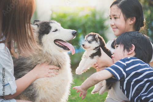 Asian family playing with siberian husky dog Wallpaper Mural