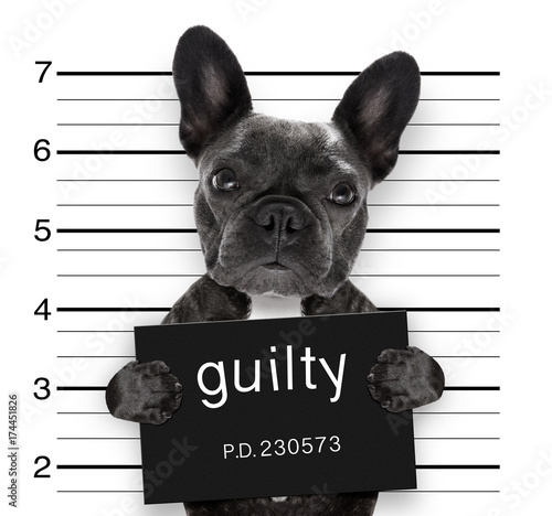 Aluminium Prints Crazy dog mugshot dog at police station