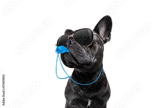 Canvas Prints Crazy dog Referee dog with whistle