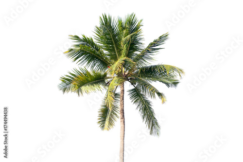 La pose en embrasure Palmier Natural photo of coconut tree isolated on white