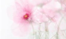 Single Dreamy Surreal Pink Flower