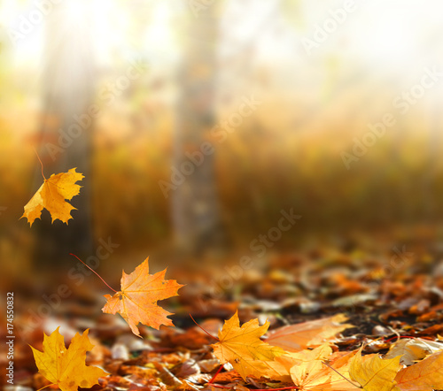 Cadres-photo bureau Automne Beautiful autumn landscape with yellow trees and sun. Colorful foliage in the park. Falling leaves natural background