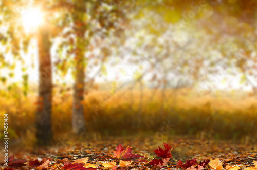 Aluminium Prints Autumn Beautiful autumn landscape with yellow trees,green and sun. Colorful foliage in the park. Falling leaves natural background