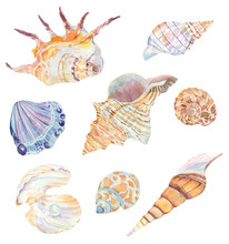 Set Of Watercolor Sea Shells