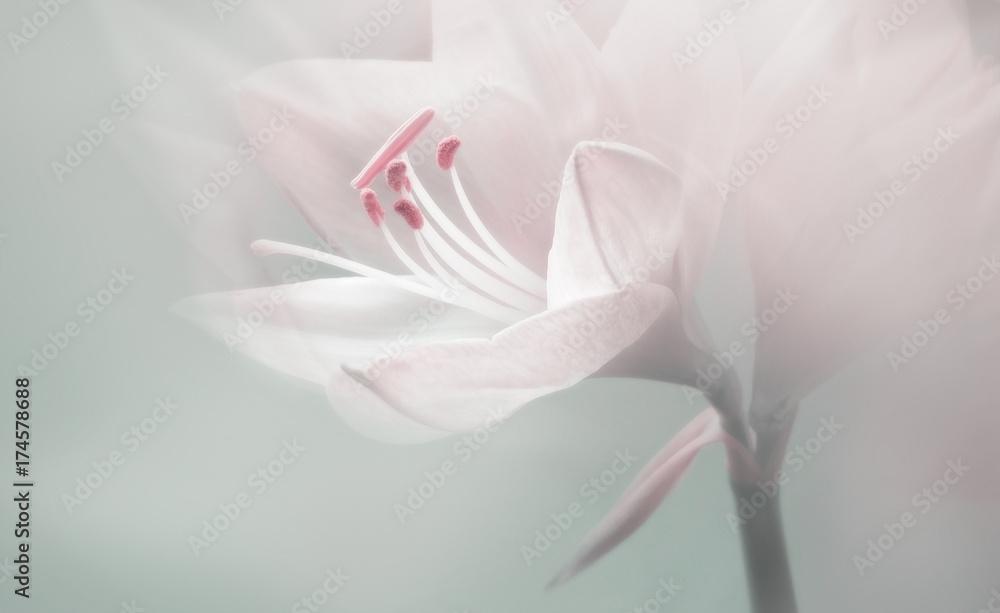 Fototapeta single dreamy surreal white flower