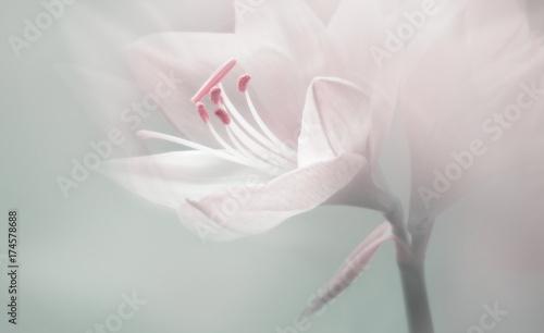 Obraz single dreamy surreal white flower  - fototapety do salonu
