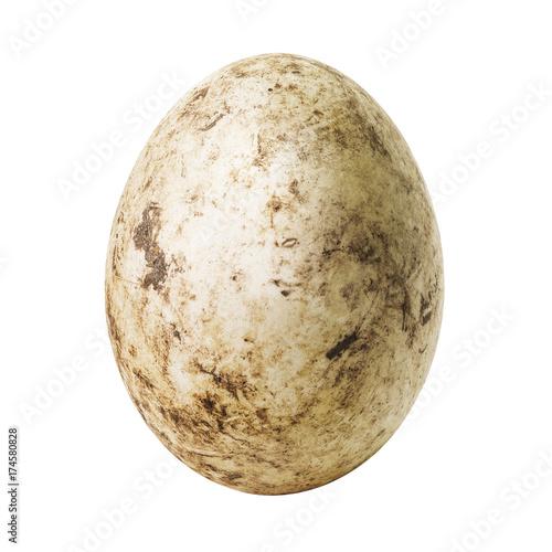 White dirty egg