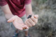 Bug On Boys Hand