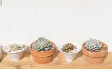 Four Pots With Succulent