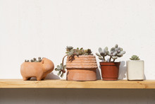 Potted Succulent On Wooden Shelf
