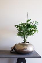 Fern Plant In Brass Pot On Woo...