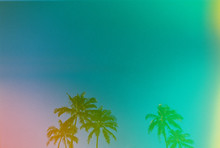 Multi Colored Palm Trees With ...