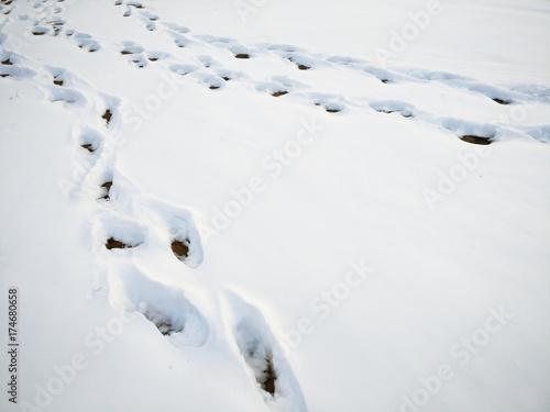 Fotografie, Obraz  Snowfield and Footprint