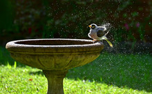 Noisy Minor Splashing Water