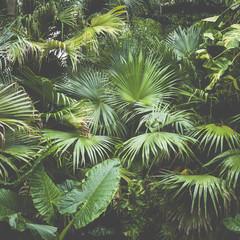 Fototapetabeautiful palm leaves of tree in sunlight