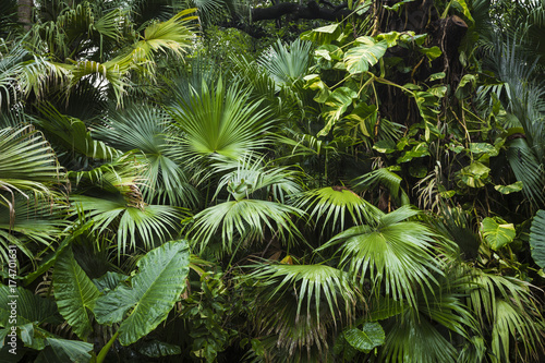 Obraz beautiful palm leaves of tree in sunlight - fototapety do salonu