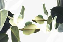 Double Exposure Of Plants