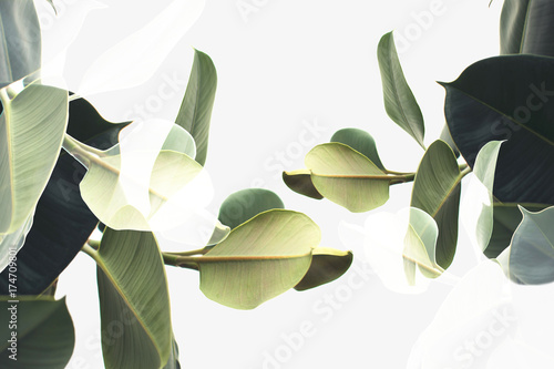 Wall Murals Plant double exposure of plants