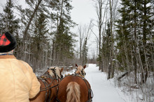 Back Of Horses And Sleigh Ride...
