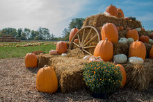 Pumpkins And Haystacks On The Farm