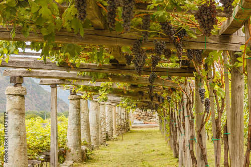 the typical agricultural architecture of the vineyards of Carema, in Piedmont, I Fototapeta