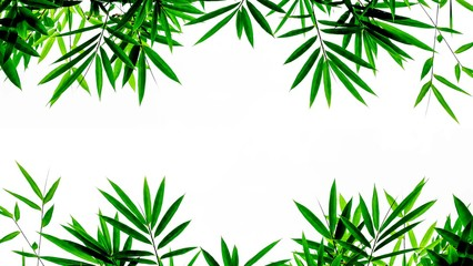 Fototapetagreen bamboo leaves isolated on white background