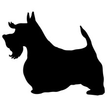 Lovely Scottish Terrier Silhouette. Doggy Scotty, Puppy Black Contour. Freehand Illustration For Posters, Covers, Prints, Fabric, Textile, T Shirt, Logotype, Vet. Home Animals Graphic Character.