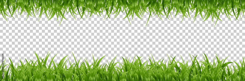 Fototapety, obrazy: Vector realistic isolated green grass borders for decoration and covering on the transparent background.