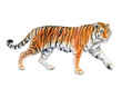 Tiger isolated on white background. Watercolor. Illustration. Template. Handmade.