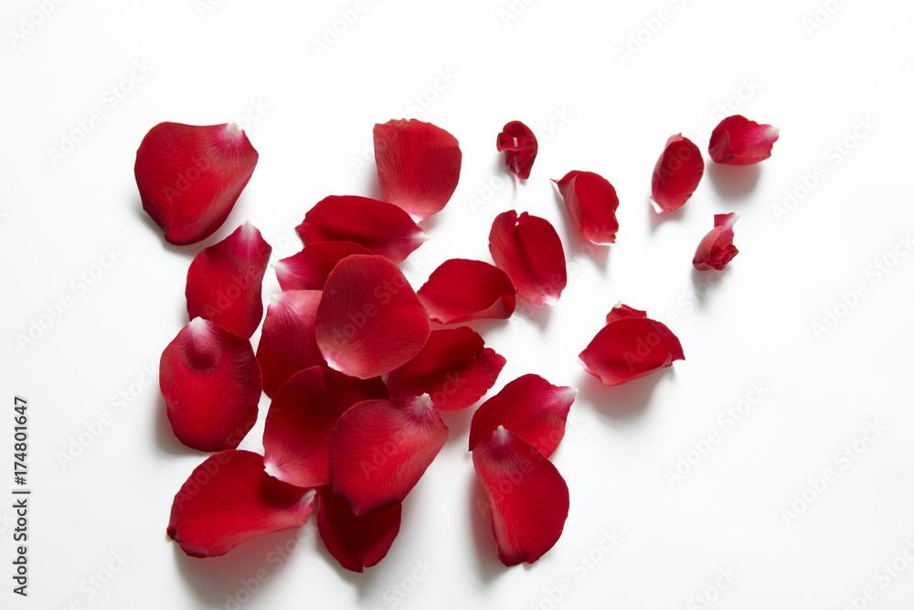 Fototapeta バラの花びら