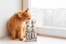 Cute Ginger Cat Biting Wooden ...