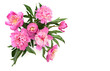 Bouquet of pink peonies on a white background with space for text. Top view, flat lay