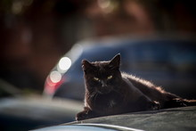 Black Cat On The Car Roof