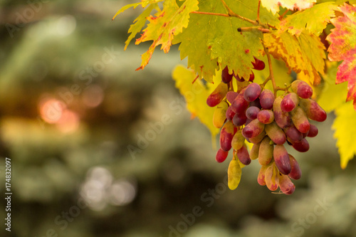 Recess Fitting Vineyard Weintrauben