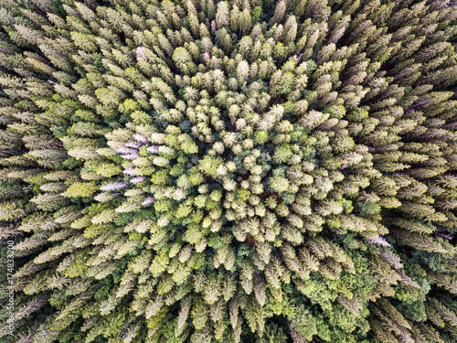 Spoed Foto op Canvas Grijze traf. pine tree forest from above