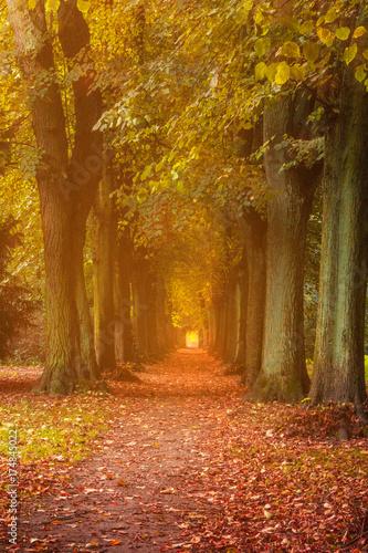 Goldener Herbst im Park in einer Allee Canvas Print