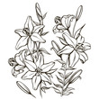 Bouguet of lilies