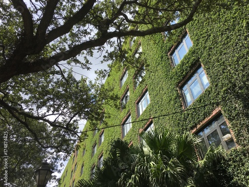 Ivy Walls On A Tall Brick Apartment Building