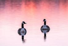 Goose Sunset