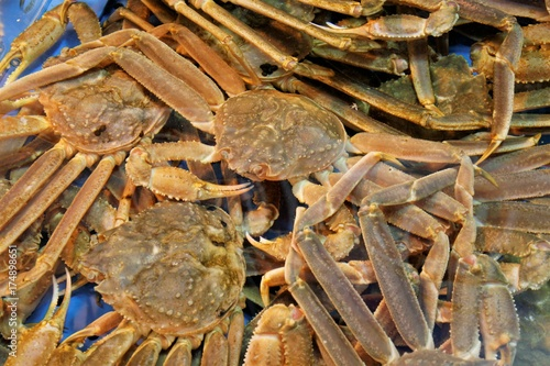 fresh snow crab in seafood market