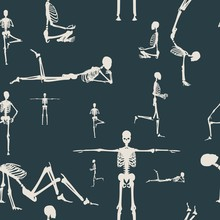 Human Skeleton Sitting. Vector...