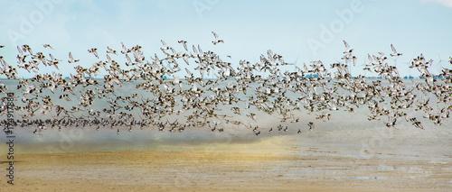 Freiheit, Traum vom Fliegen, Möwenflug, Möwenschwarm über der Nordsee :)