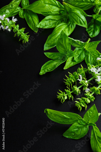 Obraz Fresh juicy aromatic herb basil and inflorescence in a pattern on a dark background top view with copy space - fototapety do salonu