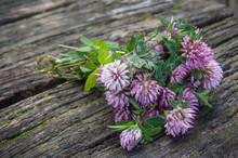Bouquet De Fleurs De Trèfle S...