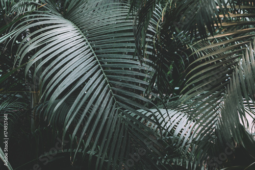 Palm garden background Fototapeta
